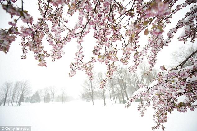Primavera nieve